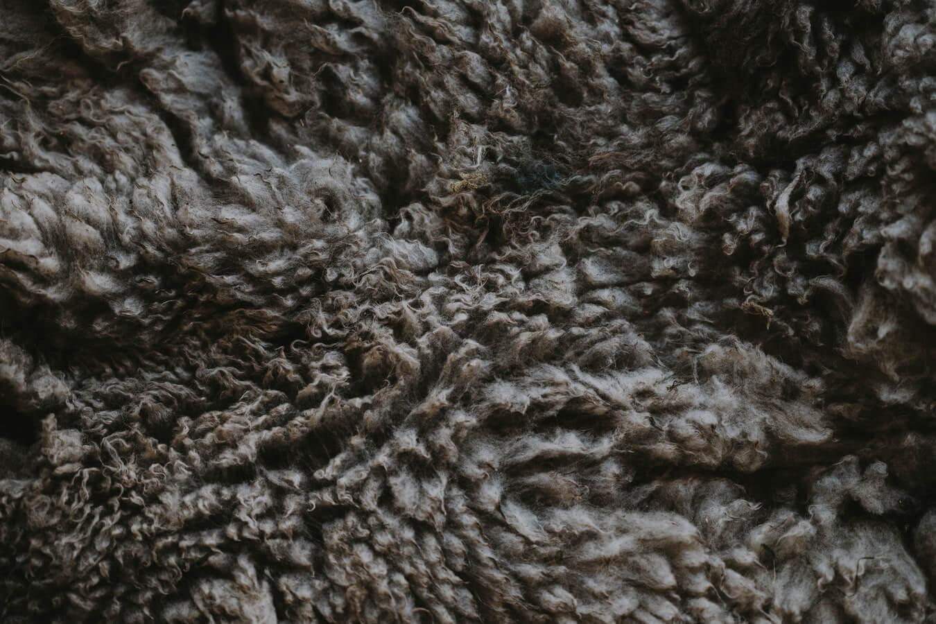 Wol Woolrich